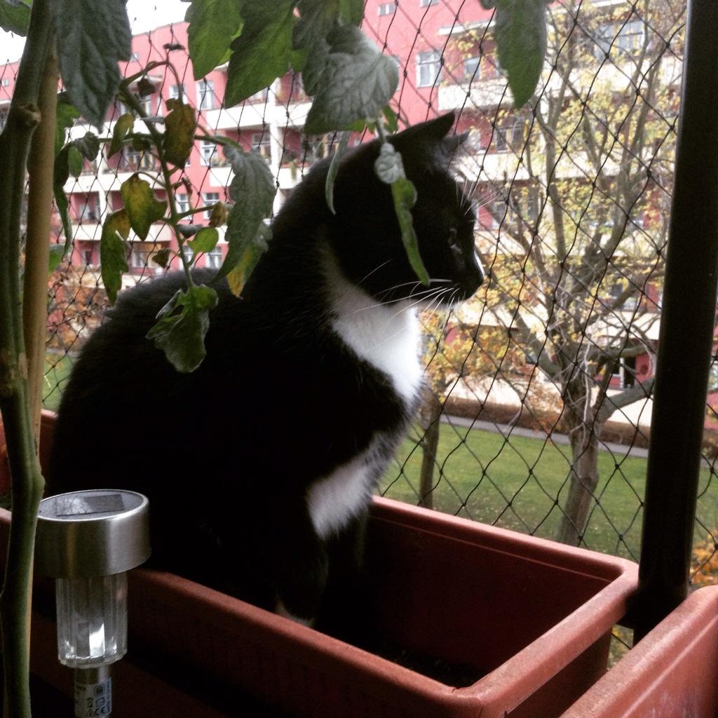 Balkon-Kater